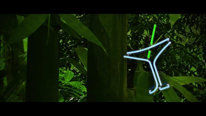 Jungle Lyric Video
