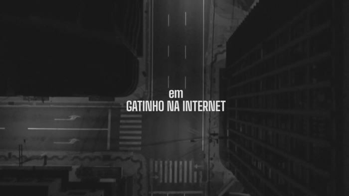 Gatinho na Internet