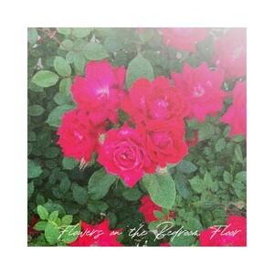 Flowers On The Bedroom Floor Songs Download | Flowers On The Bedroom Floor Songs MP3 Free Online :Movie Songs - Hungama