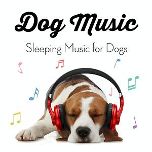 Dog Music Sleeping Music For Dogs Songs Download Dog Music Sleeping Music For Dogs Songs Mp3 Free Online Movie Songs Hungama